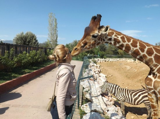 Attica Zoological Park: In love with a giraffe