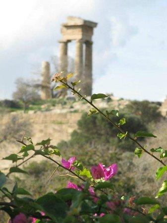 Rhodes Wonder - Private Taxi Tours: rhodes acropolis