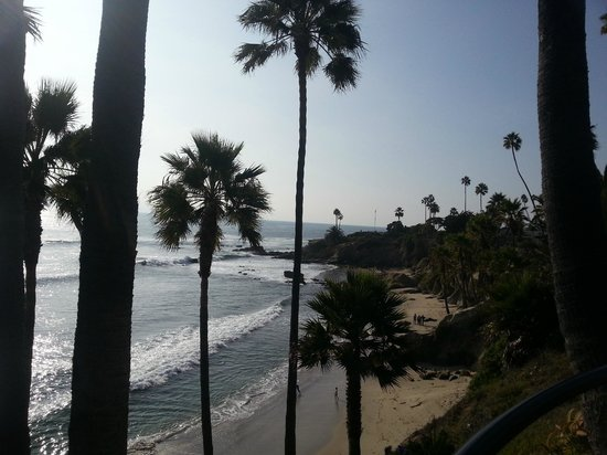 Heisler Park: beautiful palm trees