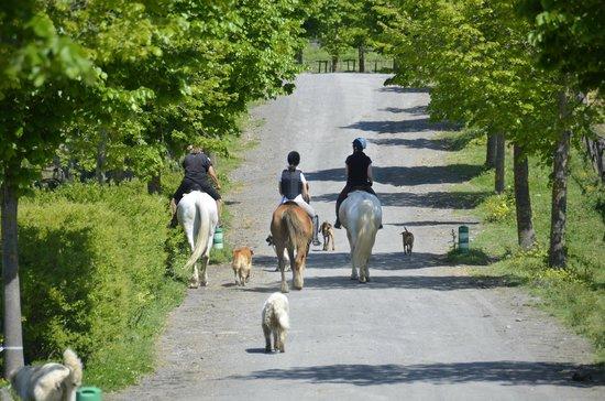 Country Relais I Due Laghi: Partenza per la passeggiata a cavallo