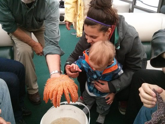 EcoCruising: Touching sea stars! How cool is that!