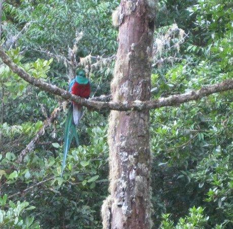 Suenos del Bosque : resplendant quetzal