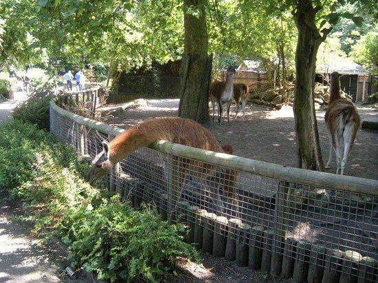 Artis Zoo: yum yum