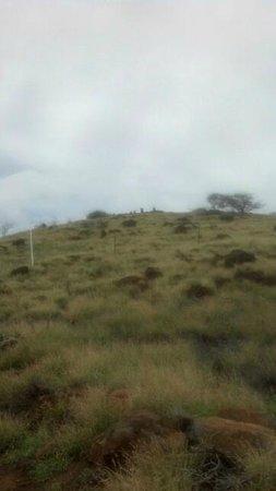 Pu'ukohola Heiau: you have to keep your distance/good hike