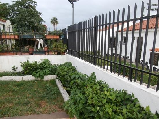 Santa Clara Bungalows: our bungalow garden.