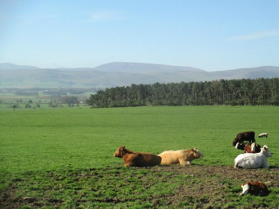 Fenton Hill Farm Cottages: View from farm