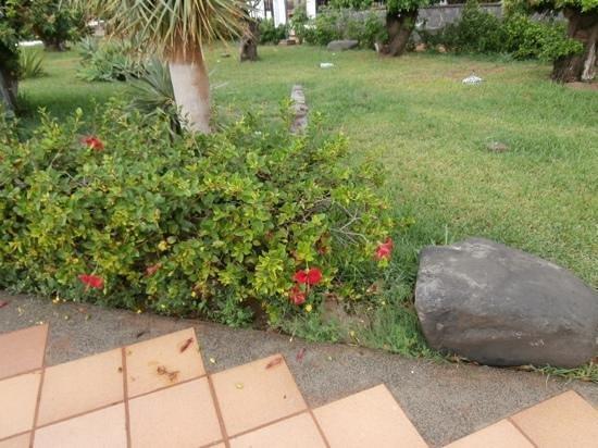 Santa Clara Bungalows: well kept gardens.