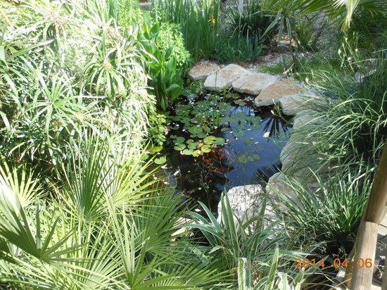 Out of Africa Resort Hotel: Beautiful pond