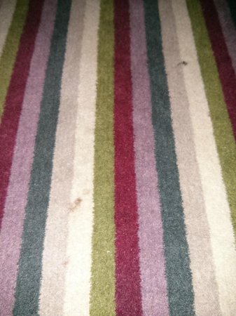 Village Hotel Manchester Cheadle : Dirty Carpet