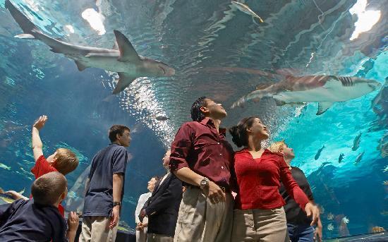 Cincinnati, OH: Newport Aquarium.