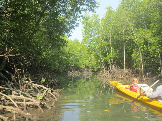 Koh Yao Yai: Kayaking in the mangroves with Coco