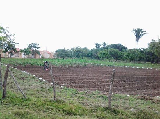 Trujillo Beach Eco Resort: Eco Farming