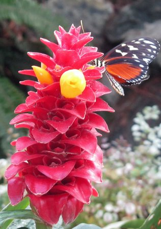 Victoria Butterfly Gardens: My favorite photo