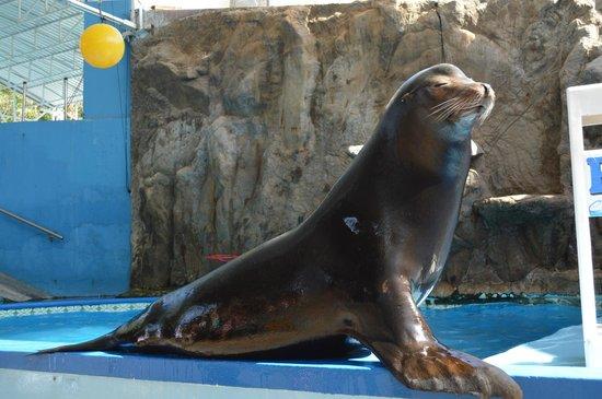 Acuario Mazatlan: Espectaculo en el acuario Mazatlán