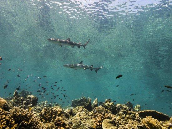 Sipadan Mabul Resort: Dive spot: Barracuda Point - Sipadan