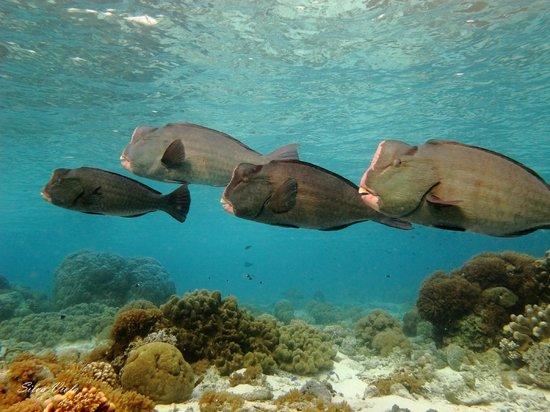 Sipadan Mabul Resort: Dive spot: Coral Gardens - Sipadan
