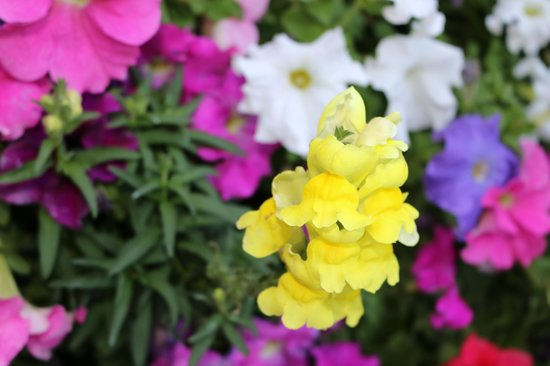 Chaparral Suites Scottsdale: Beautiful flowers were everywhere!