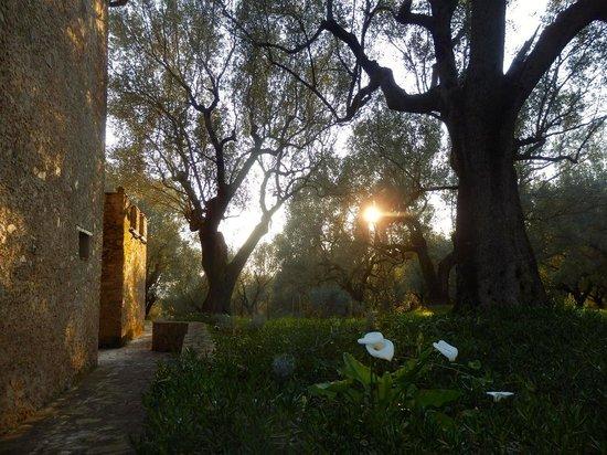 Terradura, Włochy: La Dolce Vita im Olivenhain