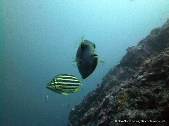 Dive North: Lord Howe and Leatherjacket