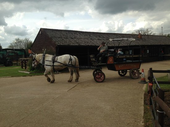 Dorset Heavy Horse Farm Park : Horse and Cart ride (free)