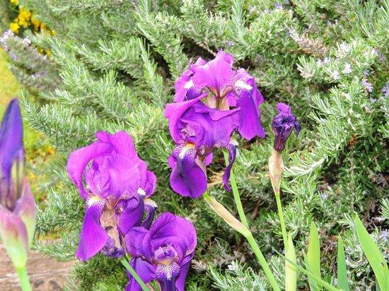 Mas Des Marguerite : Springtime at the Mas