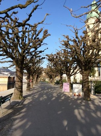 PALACE LUZERN: trees in front of palace lucerne