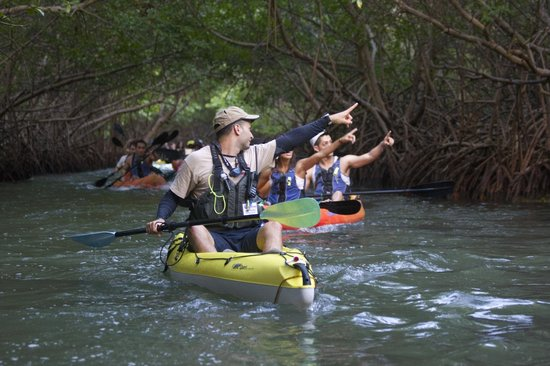 Pure Adventure : Mangrove canal to the Lagoon
