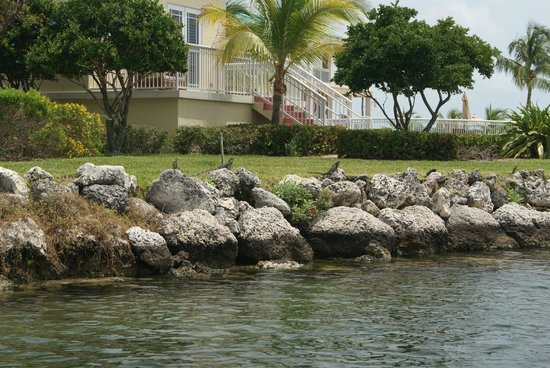 Wild About Dolphins: iguanas sunning themselves on our way out of the marina