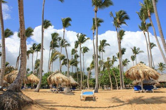 Sirenis Punta Cana Resort Casino & Aquagames: Пляж
