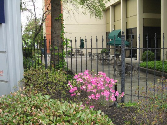 Hilton Knoxville : Spring flora outside