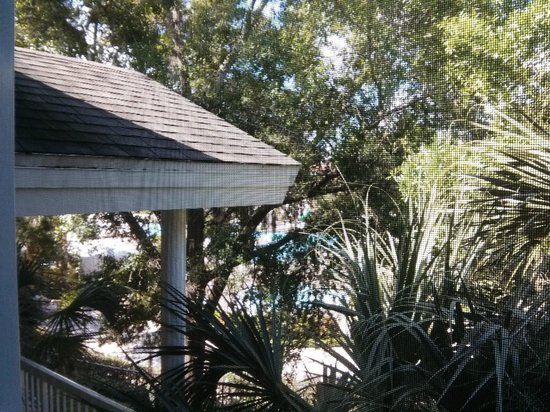 Sheraton Vistana Resort Villas- Lake Buena Vista : Palm canopy with blue pool water peeking through