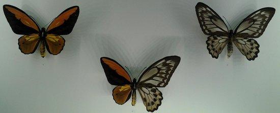 Insectarium de Montréal : самка, самец и что-то среднее