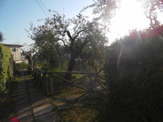 Residence Gocce di Capri: gocce