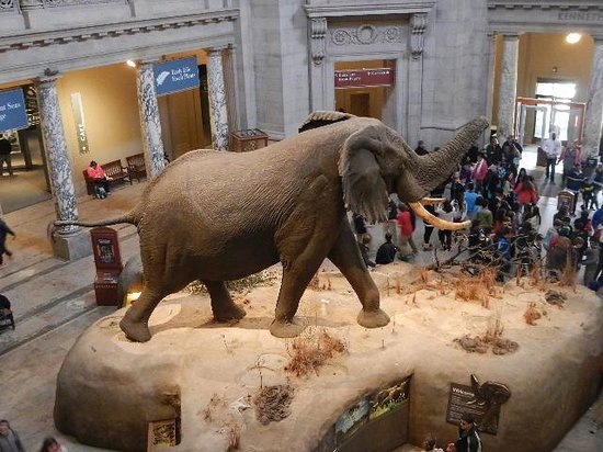 Museo Nacional Smithsonian de Historia Natural: elephant display