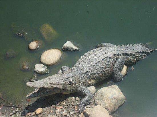 Playa Linda : croc