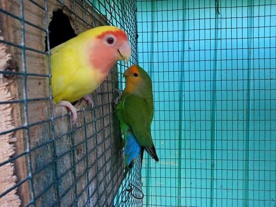Lazy Parrot Inn: cute lovebirds