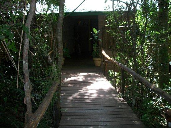 La Aldea de la Selva Lodge: En la selva