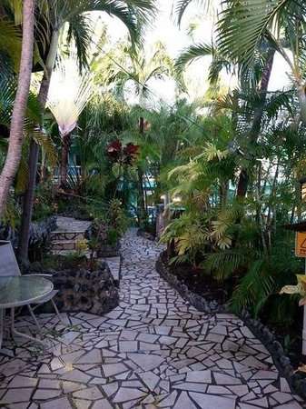 Lazy Parrot Inn : tropical patio