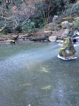 Portland Japanese Garden: heavenly falls - frozen - look at the Koi below the ice