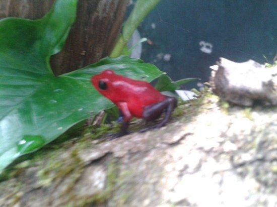 This isla Monteverde frog pond