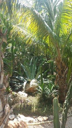 Nomadas Hostel : jardin des iguanes