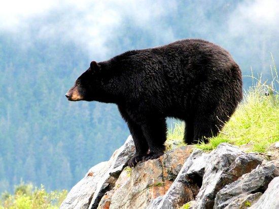 Alaska Wildlife Conservation Center: Bear