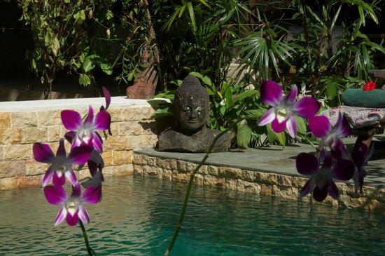 Taman Rahasia Tropical Sanctuary & Spa: Pool