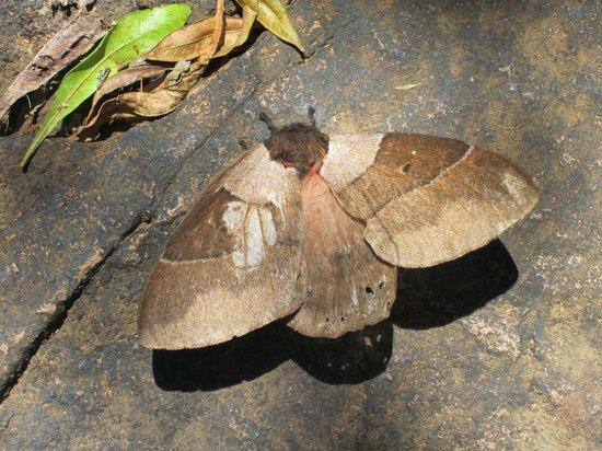 Paseo Sierra de Las Animas: Mariposa
