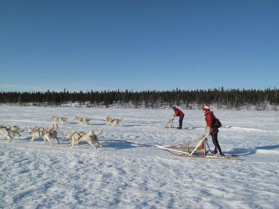 The Arctic Chalet Resort: Racing