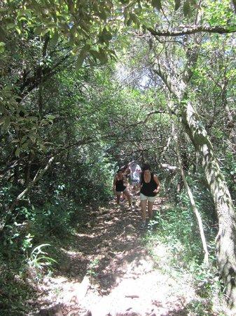 Paseo Sierra de Las Animas: Caminos