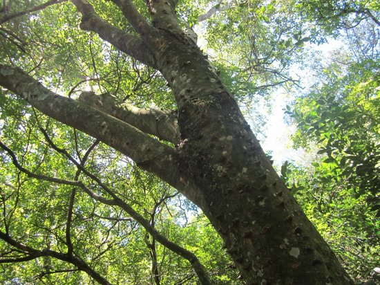 Paseo Sierra de Las Animas: Arboles