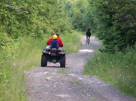 Pine Grove Lodge and Cabins: Located directly on ATV and snowmobile trails