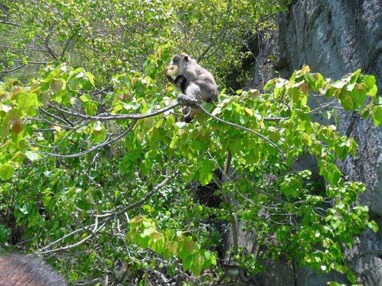 Phuket Sail Tours: cheeky monkey