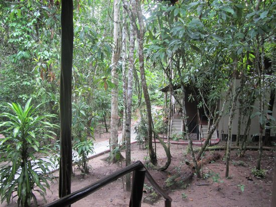 Amazon Ecopark Jungle Lodge: Surrounded by jungle - view from our cabin's front door
